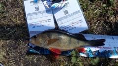 street fishing Bydgoszcz (5)